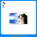 High Resolition 1290 (RGB) *1200 10.1 Inch TFT-LCD Module Sunlight Readable