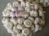 New Crop 5.0cm Normal White Garlic