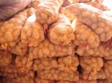 Good Quality Fresh Potato (100-150G)