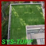 High Quality Landscape Grass with Natural Color