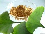 Ginkgo Biloba Extract 100% Through 80mesh Ginkgo Biloba