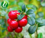 Bulk Stock Lingonberry Extract Anthocyanin 25%