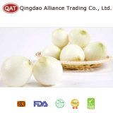 Peeled White Onion 2017 New Crop