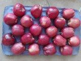 Huaniu Apple Wtih High Quality 88-198