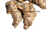 High Quality Notoginseng Extract
