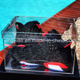 Popular Clear Acrylic Plexiglass Shoe Box (YYB-8557)