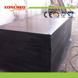 18mm Black Shuttering Plywood From Linyi