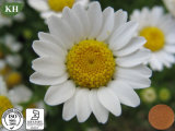 Natural Feverfew Extract 0.2% ~0.8% Parthenolide