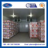 Apple Cold Room Storage 80t