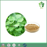 100% Natural Ginkgo Biloba Leaf Extract 24% 6% 5ppm by HPLC