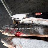 Frozen Seafood Mackerel Shark for Sale