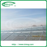 Commercial glass used greenhouse for vegetables