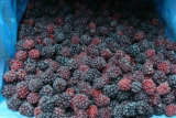IQF Blackberry or Frozen Blackberry
