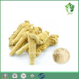 Herbal Extracts Panax Ginseng Extract Ginsenoside 2%~80%