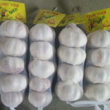 Professional Exporter for Normal White Garlic (4.5cm and up)