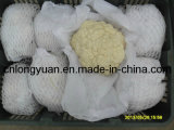 Chinese White Cauliflower with Carton Packing