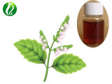 High Quality Patchouli Essential Oil