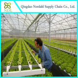 Complete Hydroponics System for Sale From Big Greenhouse Manufacturer in China