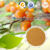 Natural Hippophae Rhamnoides Linn Extract Fructus Hippophae P. E