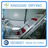 Belt Drying Equipment/Machine for Jujube