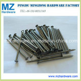 Competetive Price Common Iron Nail/Common Wire Nail