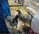 Hexagonal Wire Mesh for Chicken