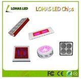 12-36V High Power 10W-100W COB LED Grow Lights Chip RGB LED Chip