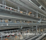 H Layer Chicken Cage Bird Cage Poultry Farm Equipment