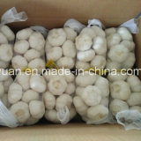 2017 Chinese New Crop Pure White Garlic