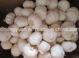 Chinese White Garlic with Carton Packing