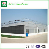 Agriculture Intelligent Multispan Film Greenhouse for Planting Vegatable