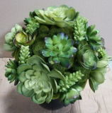 Best Selling Artificial Plants of Succulent Gu-SD0267