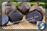 an Organic Food You Can′t Think for Single Black Garlic