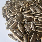 2012 New Crop Sunflower Seeds 5009