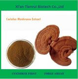 Natural Coriolus Mushroom Extract for Sale