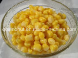 Canned Sweet Corn Kernels with High Quality, Good Taste (HACCP, ISO, KOSHER, HALAL, FDA, BRC)