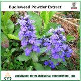 100% Natural China Origin Shiny Bugleweed Powder Extract 10: 1, 20: 1