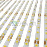 5050 LED Strip Light 60LEDs/M with Ce TUV