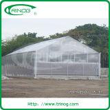 PC sheet venlo greenhouse for sale