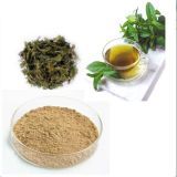 Organic Green Tea Extract with Theanine
