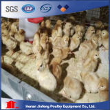 H Type Automatic Chikcen Cage for Pullet/ Poultry Equipment for Sale