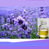 100% Pure Organic Lavender Essential Oil