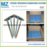 Twisted Shank Umbrella Head Roofing Nails with Good Price