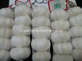 2016 Crop Fresh Garlic Competitive Prices Good Quality