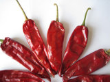 Red Pepper--Dry Red Yidu