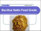 Feed Grade Bacillus Natto for Animal Promote Healthy & Growth