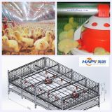 Poultry House Machinery with Steel Construction From Qingdao Hapy