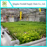 Greenhouse Leaf Vegetable Growing Hydroponic System