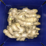 Dried Air Ginger for European and USA Market