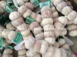 High Quality Chinese Garlic (5P/200G BAG)